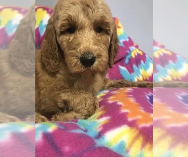 Medium Photo #4  Breeder Profile in RICHMOND, IL, USA