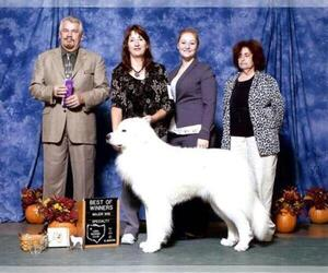 Anatolian Shepherd Breeder in NEW TAZEWELL, TN, USA