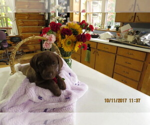 Main photo of Labrador Retriever Dog Breeder near TUSTIN, MI, USA