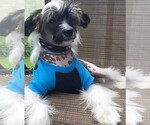 Chinese Crested Breeder in WELCH, OK, USA