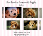 Small Photo #1  Breeder Profile in LISBON, OH, USA