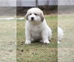 Small #6 Breeder Profile image