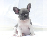Small Photo #1  Breeder Profile in LOS ANGELES, CA, USA