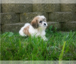 Small Photo #27  Breeder Profile in LISBON, OH, USA