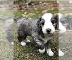 Small #36 Breeder Profile image