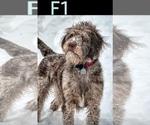Small #64 Breeder Profile image