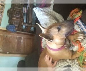 Main photo of Bull Terrier Dog Breeder near WILLOW, OK, USA