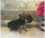 French Bulldog Breeder in ARROYO GRANDE, CA, USA