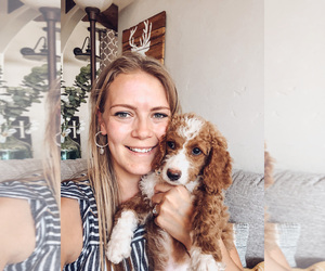 Double Doodle Dog Breeder in ARCHES,  USA