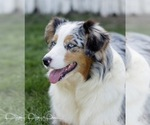 Small Photo #9  Breeder Profile in ROBERTS, IL, USA