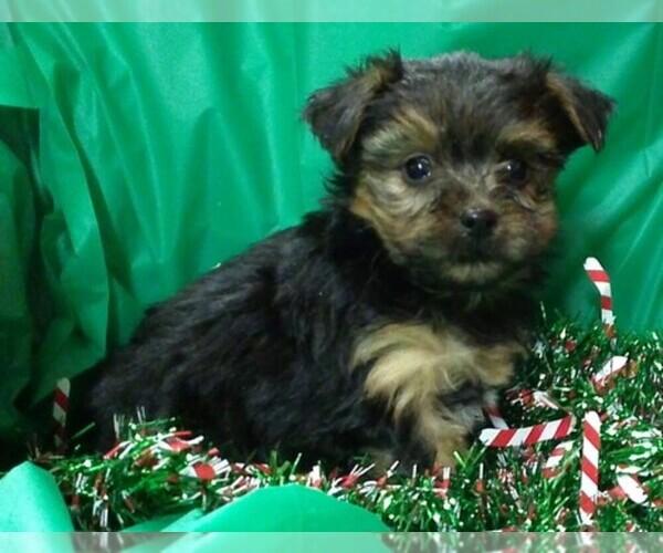 Medium Photo #1  Breeder Profile in CONOWINGO, MD, USA