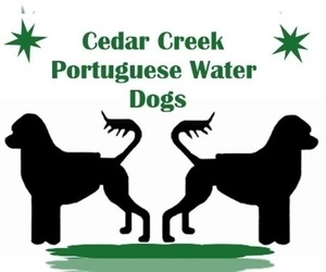 Portuguese Water Dog Dog Breeder near LAKEVIEW, MI, USA
