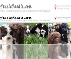 Aussiedoodle Breeder in KENNEWICK, WA