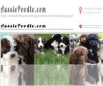 Aussiedoodle Breeder in KENNEWICK, WA, USA
