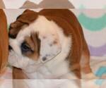 Small #67 Breeder Profile image