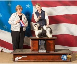 Havanese Dog Breeder near MONTGOMERY, TX, USA