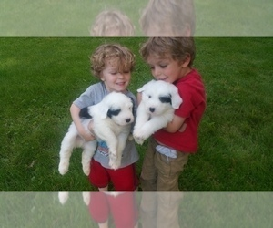 Old English Sheepdog Dog Breeder near GALLATIN, MO, USA