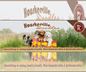 Goldendoodle Dog Breeder near LANCASTER, MN, USA