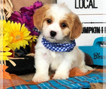 Small Photo #23  Breeder Profile in LISBON, OH, USA