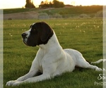 Great Dane Breeder in CALDWELL, ID, USA