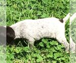 Small Photo #2  Breeder Profile in PARSONS, KS, USA