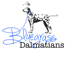 Main photo of Dalmatian Dog Breeder near LEXINGTON, KY, USA