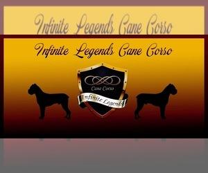 Main photo of Cane Corso Dog Breeder near SUFFOLK, VA, USA