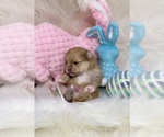 Small Photo #6  Breeder Profile in STKN, CA, USA