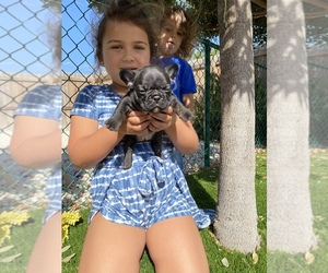 Main photo of French Bulldog Dog Breeder near DANIA, FL, USA