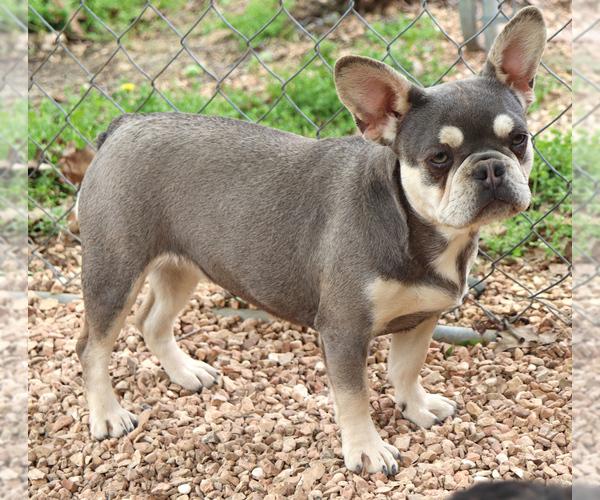 Medium Photo #2  Breeder Profile in BELLE CENTER, MO, USA