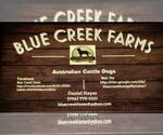 Australian Cattle Dog Breeder in JEFFERSON, SC, USA
