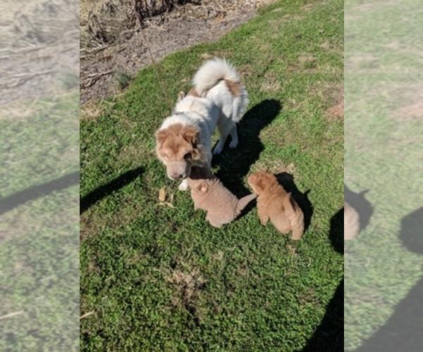 Medium Photo #11  Breeder Profile in OBLONG, IL, USA