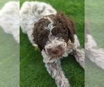 Small Photo #18  Breeder Profile in AGUA DULCE, CA, USA