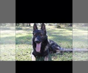 German Shepherd Dog Breeder in PINEHURST, TX
