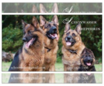 German Shepherd Dog Breeder in PHOENIX, AZ, USA