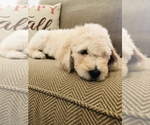 Small Photo #15  Breeder Profile in EL CAJON, CA, USA