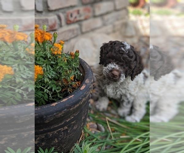 Medium Photo #27  Breeder Profile in AGUA DULCE, CA, USA