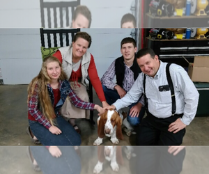 Main photo of Basset Hound Dog Breeder near THAYER, MO, USA