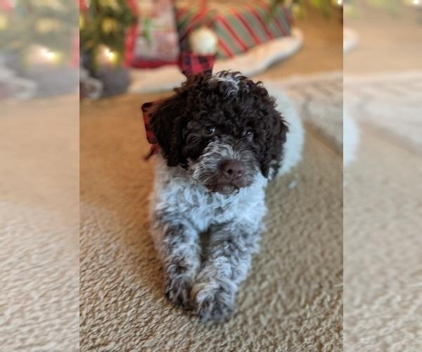 Medium Photo #24  Breeder Profile in AGUA DULCE, CA, USA