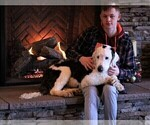 Small Photo #4  Breeder Profile in STANLEY, VA, USA