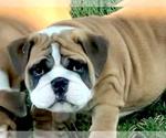 Small #129 Breeder Profile image