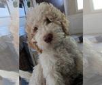 Small Photo #5  Breeder Profile in AGUA DULCE, CA, USA