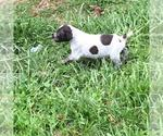Small Photo #3  Breeder Profile in PARSONS, KS, USA