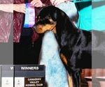 Rottweiler Breeder in BLANCHARD, OK