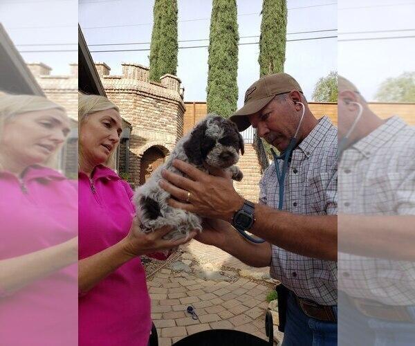 Medium Photo #29  Breeder Profile in AGUA DULCE, CA, USA