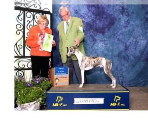 Main photo of Whippet Dog Breeder near DONALDS, SC, USA