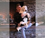 Small Photo #3  Breeder Profile in STANLEY, VA, USA