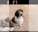 Small #62 Breeder Profile image