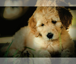 Small Photo #6  Breeder Profile in LISBON, OH, USA