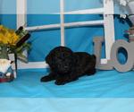 Small #45 Breeder Profile image